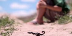 الله يرحمهم وبعد وفاة طفلين… لسعة عقرب تودي بحياة رضيع ابن إمام مسجد ودعوات لوزارة الصحة بتوفير الأمصال