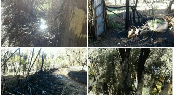 النيران تلتهم بستانين فلاحيين وتجهز على المحصول والأمن يحقق -الصور-