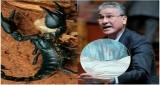 برافو… المركز المغربي لحقوق الانسان يوجه رسالة قوية لوزيرة الصحة ويطالبه بتوفير المصل المضاد للسعات العقارب