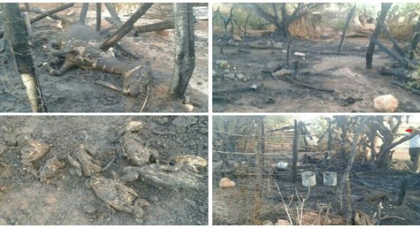مؤلم وبالصور… النيران تلتهم دواجن ودواب وأشجار الزيتون والدرك الملكي يحقق