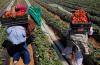 لجنةوزارية مغربية تزور إسبانيا بعد جدل تعرض العاملات المغربيات في الضيعات الفلاحية الإسبانية للتحرش – بلاغ-