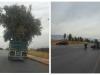 تفهم تحماق… شاحنة تنقل شجرة زيتون ضخمة تسبب في كارثة ببني ملال -الصور-