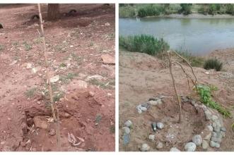 فعاليات جمعوية بقصبة تادلة تندد بهمجية اقتلاع و تذمير أشجار مغروسة في إطار تطوعي بفضاءات ايكولوجية جميلة -الصور-