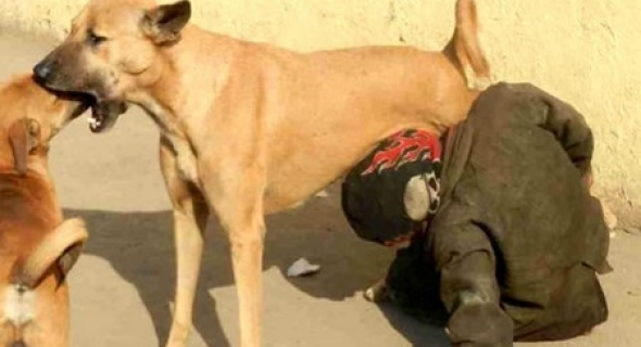 الداخلية المغربية تكشف حقيقة صورة رائجة بالفيسبوك والمواقع لطفل يرضع من ثدي كلبة -بلاغ-