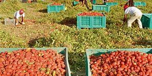 يسحاب ليهم فالمغرب… الشرطة الإيطالية تعتقل 9 مهاجرين مغاربة متورطين في استغلال عمال مغاربة في الزراعة