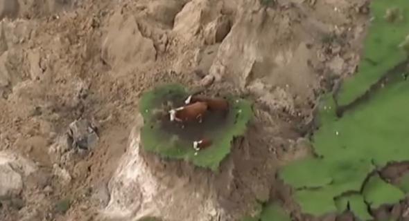 بالفيديو … زلزال بنيوزيلاندا يعزل بقرات فوق جبل