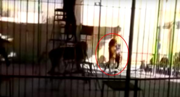 فيديو صادم … أسد يفترس مدربه أمام الأطفال في مصر