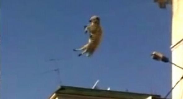 سقوط كبش من فوق سطح منزل ونفوقه على الفور والجيران يقتنون خروف للاسرة في اواخر الليل ويآزرونها