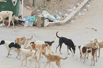 الكلاب الضالة تهدد سلامة المواطنين بأفورار وبني ملال والساكنة تناشد المسؤولين