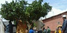 السلطات المحلية بواويزغت تشن حملة واسعة لاخلاء الملك العمومي والساكنة تستحسن