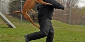 """عامل إقليم أزيلال يتدخل أمام تزايد الطلب لتوفير حقن الدواء المضاد لداء الكلب """"جهل"""" وتاكسي نيوز تقدم نصائح"""