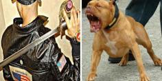 """لبوليس مابقاوش يتعاتقو… """"بزناس"""" يحمل سيفا ويعربد بالشارع ويحرض كلبه على رجال الأمن والرصاص ينقد الموقف!"""