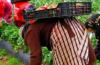 ربي عوين… مئات العاملات المغربيات يلتحقن بحقول إسبانيا لجني الفراولة بينهن عاملات من جهة بني ملال