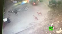 فيديو يحقق أعلى نسبة مشاهدة على يوتوب لمعركة دامية بين كلبين بروسيا ولاعب كاراطي دافع عن نفسه