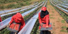 استافدو من العام لي فات… وزارة التشغيل تعلن عن اجراءات جديدة لهجرة العاملات المغربيات وارتفاع عددهن سنة 2019 -بلاغ-