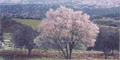 60 شاب من أبناء الفلاحين بالمناطق الجبلية يستفيدون من دورة تحسيسية حول زراعة أشجار اللوز بجماعة ناوور في إطار الفلاحة التضامنية