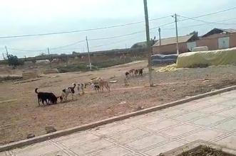 جمعيات المجتمع المدني باحد بوموسى توجه شكاية لرئيس الجماعة لمحاربة الكلاب الضالة والحد من خطرها وتهديدها