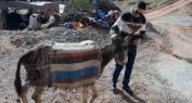 """بالفيديو… حمار أغبالة الذي وقف في """"العقبة"""" و كشف عورة """"الجماعة"""" و""""الصحافة""""!"""