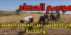 انطلاق موسم الحصاد وسط توقعات بمحصول قياسي ،والمزارع بين الحصاد التقليدي المكلف و المكننة (فيديو من جبال ايت اعتاب)
