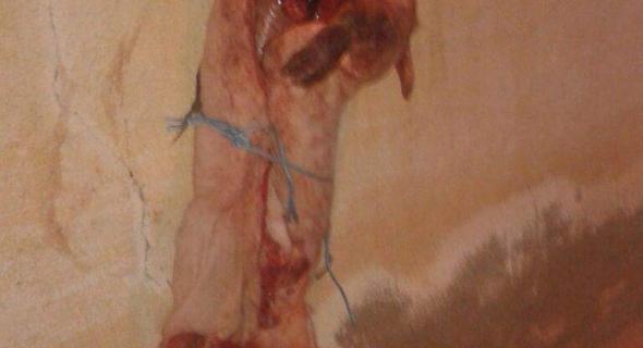 خطير وانفراد… مجهولون يرهبون مغاربة و يعلقون جثة خنزير مذبوح على  مسجد باسبانيا ويدنسون بابه بالدماء -الصور-